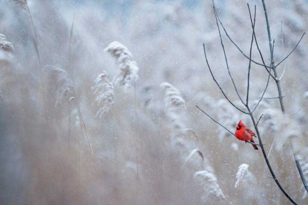 koud in de winter